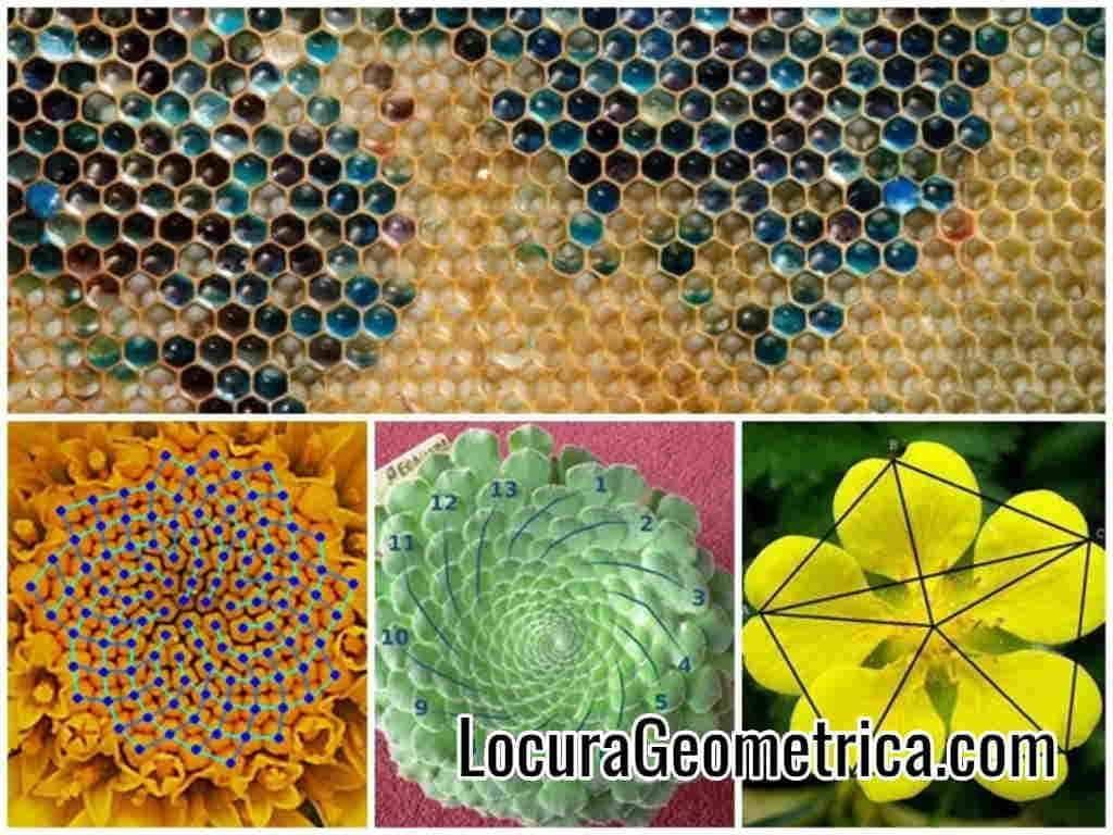 patrones geometricos de diseño grafico