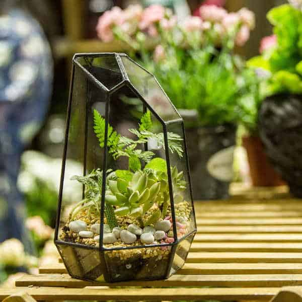 terrario geometrico plantas interior maceta